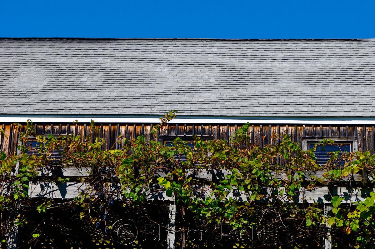 Nashoba Vallery Winery, Bolton MA