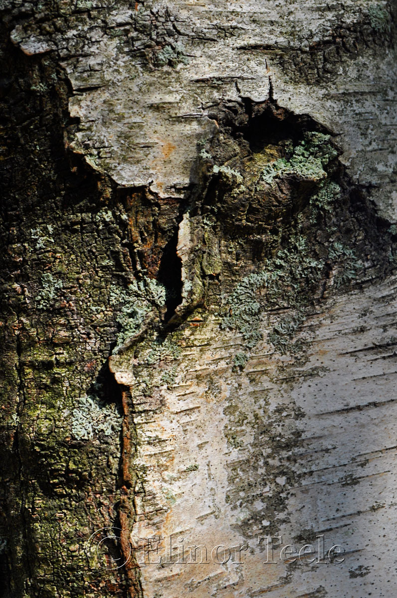 Bark, Blackburn Center, Gloucester MA