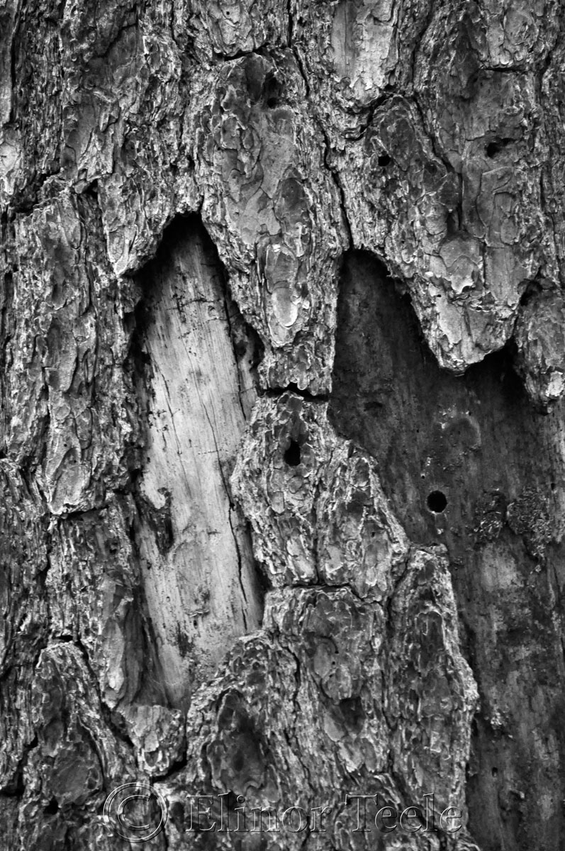 Bark in Black & White, Ravenswood, Gloucester MA 2