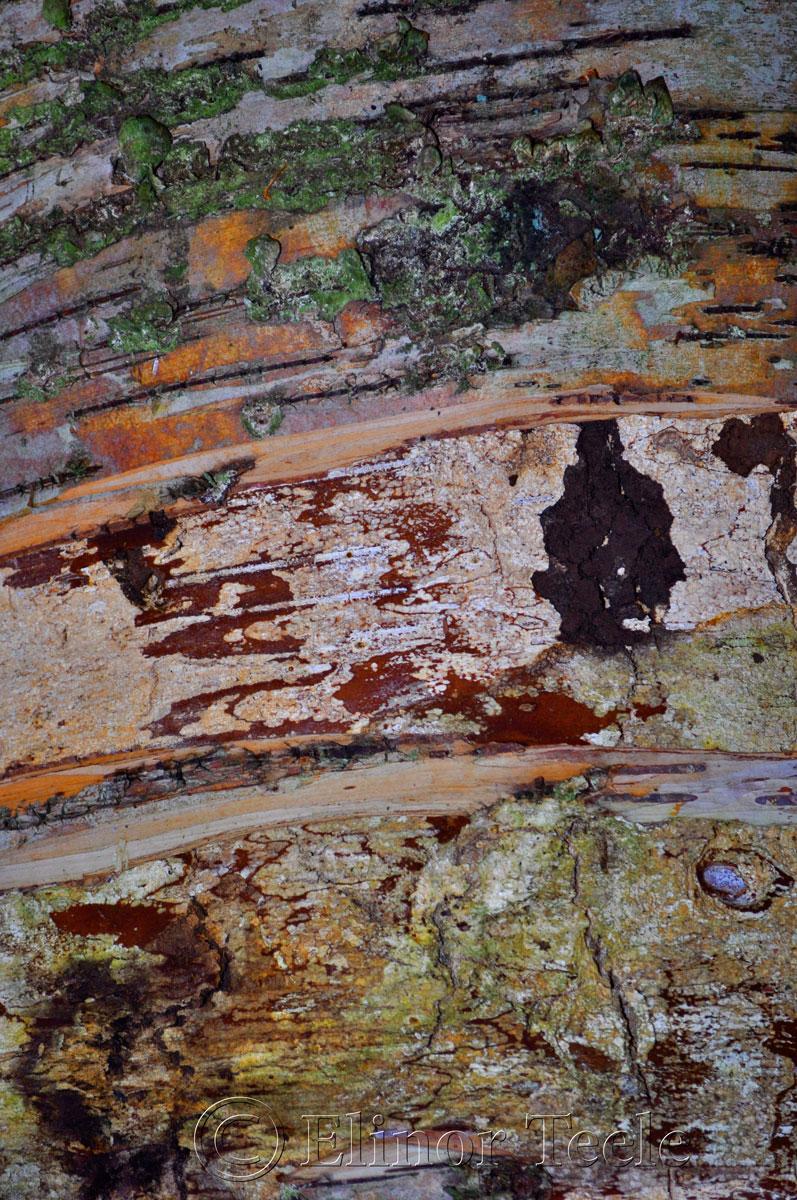 Bark in Color, Ravenswood, Gloucester MA