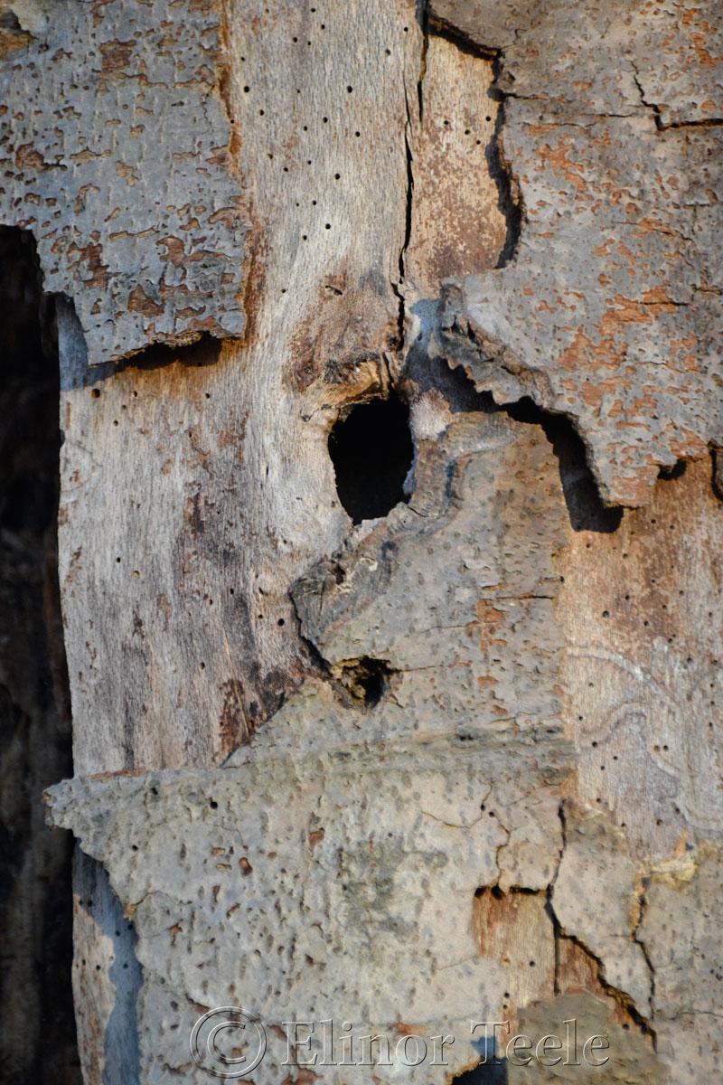 Bark in December, Ravenswood, Gloucester MA 1