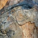 Bark in December, Ravenswood, Gloucester MA 2