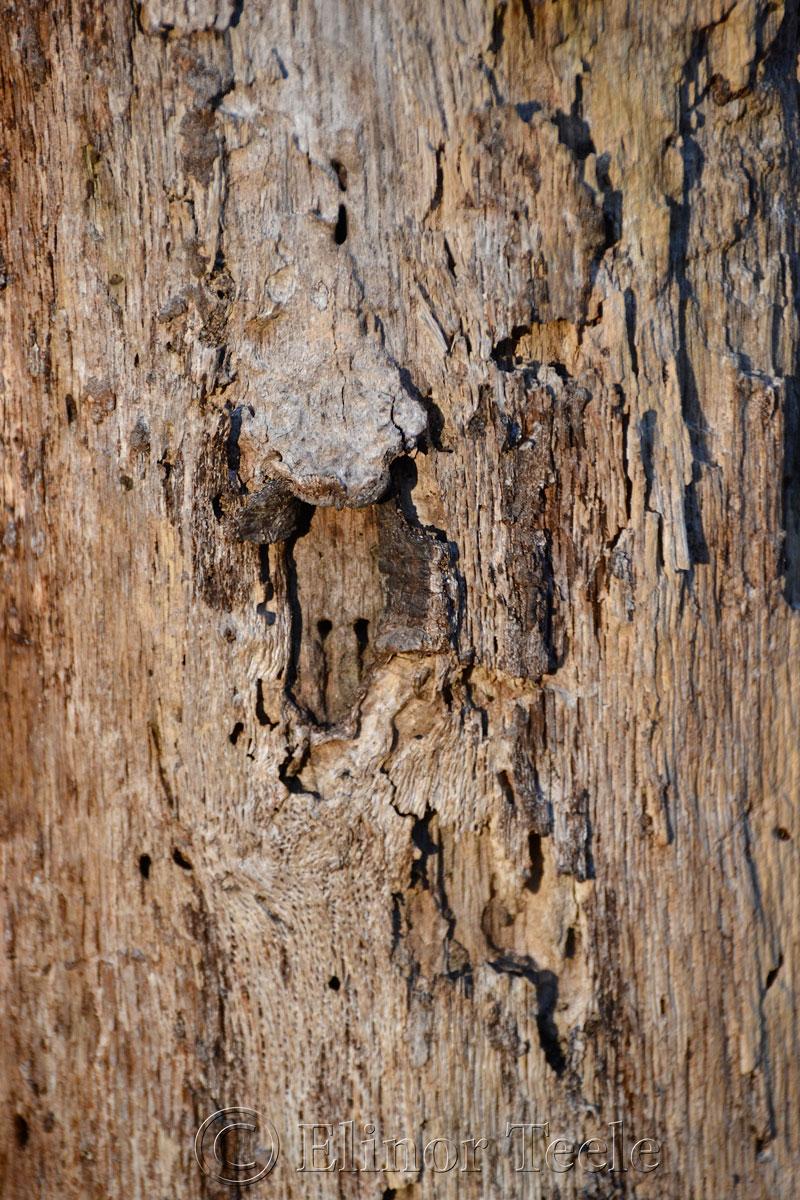 Bark in December, Ravenswood, Gloucester MA 3