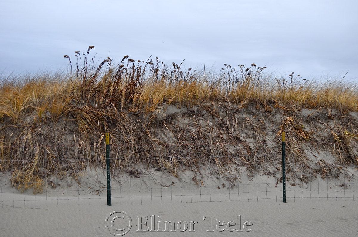 Dunes, Good Harbor Beach in December, Gloucester MA 1