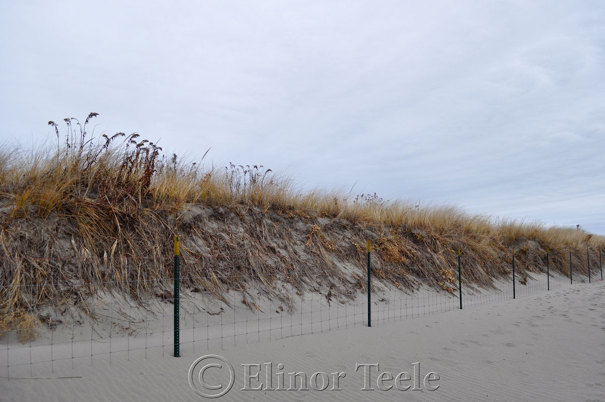 Dunes, Good Harbor Beach in December, Gloucester MA