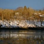 Low Tide & Trees, Annisquam MA