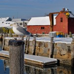 Motif 1 & Seagull in the Snow, Rockport MA