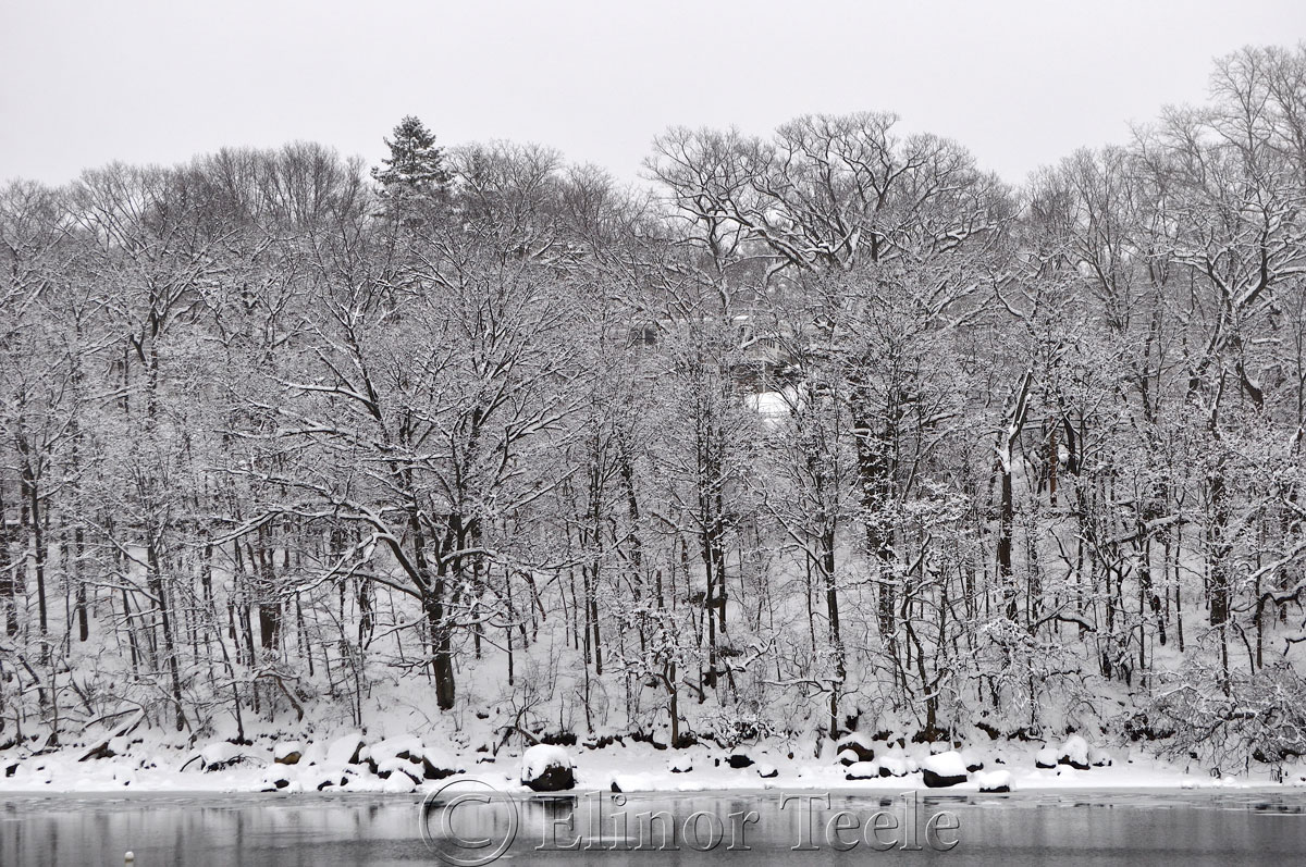 Snowy Woods, Annisquam MA