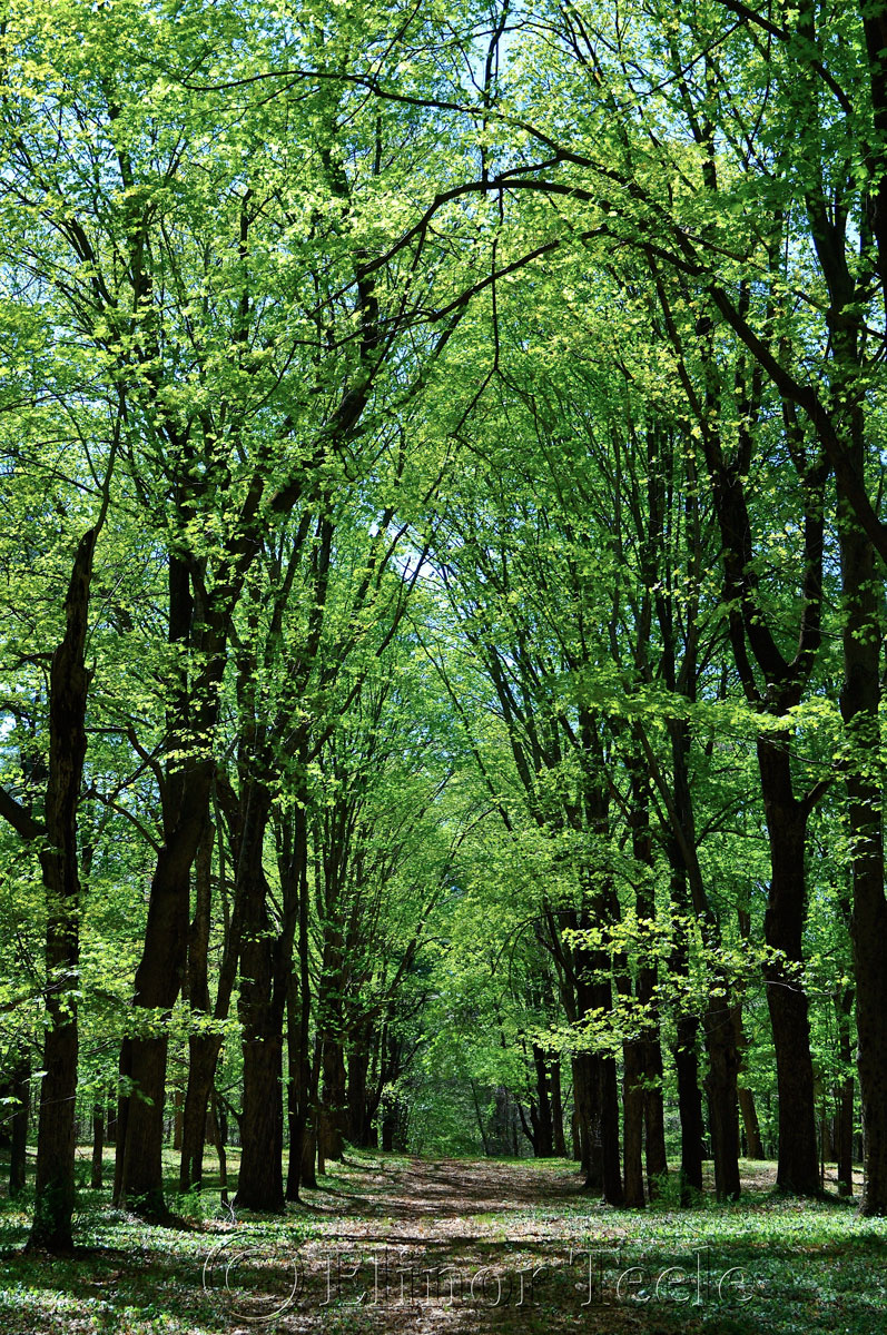 Spring Woods, Appleton Farms, Ipswich MA