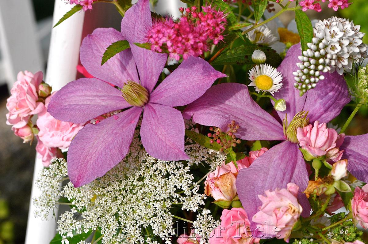 Annisquam Sea Fair 2014 - Flower Table 3
