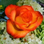 Annisquam Sea Fair 2014 - Flower Table 5