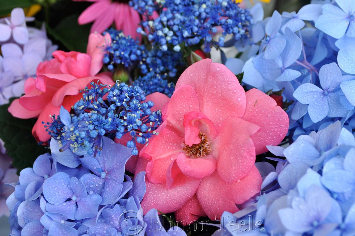 Annisquam Sea Fair 2014 - Flower Table 6