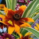 Annisquam Sea Fair 2014 - Flower Table 7