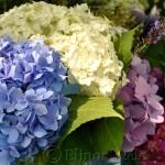 Annisquam Sea Fair 2014 - Flower Table 8