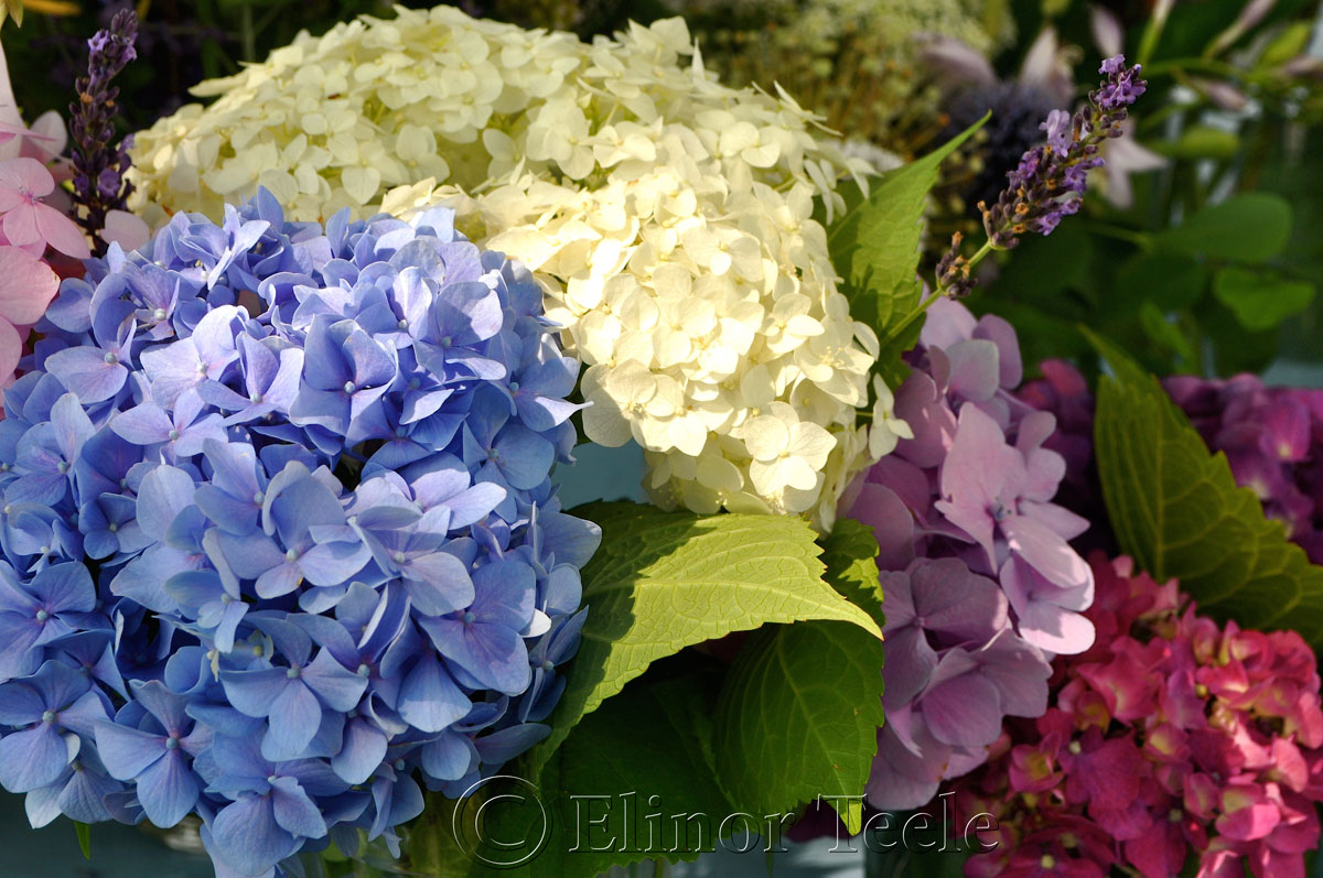 Annisquam Sea Fair 2014 - Flower Table 8