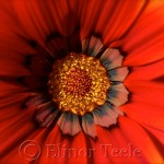 Red & Orange Flower 2