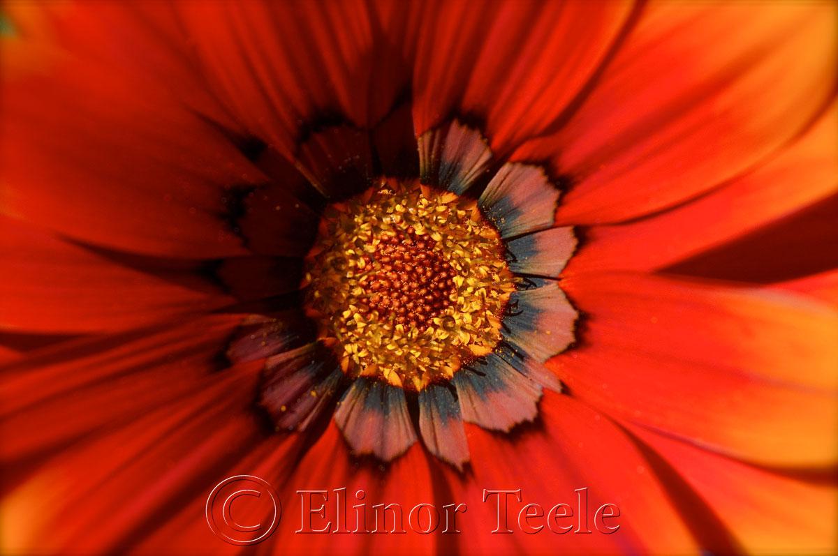 Red & Orange Flower 2
