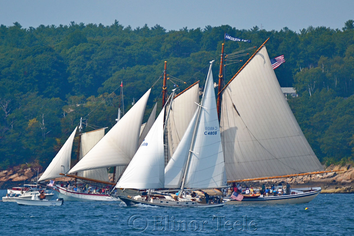 Parade of Sail, Gloucester Schooner Festival 2014 5