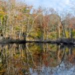 Mid-October Foliage, Goose Cove Reservoir, Gloucester MA 3
