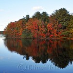 Red Fall Foliage, Gloucester MA 1