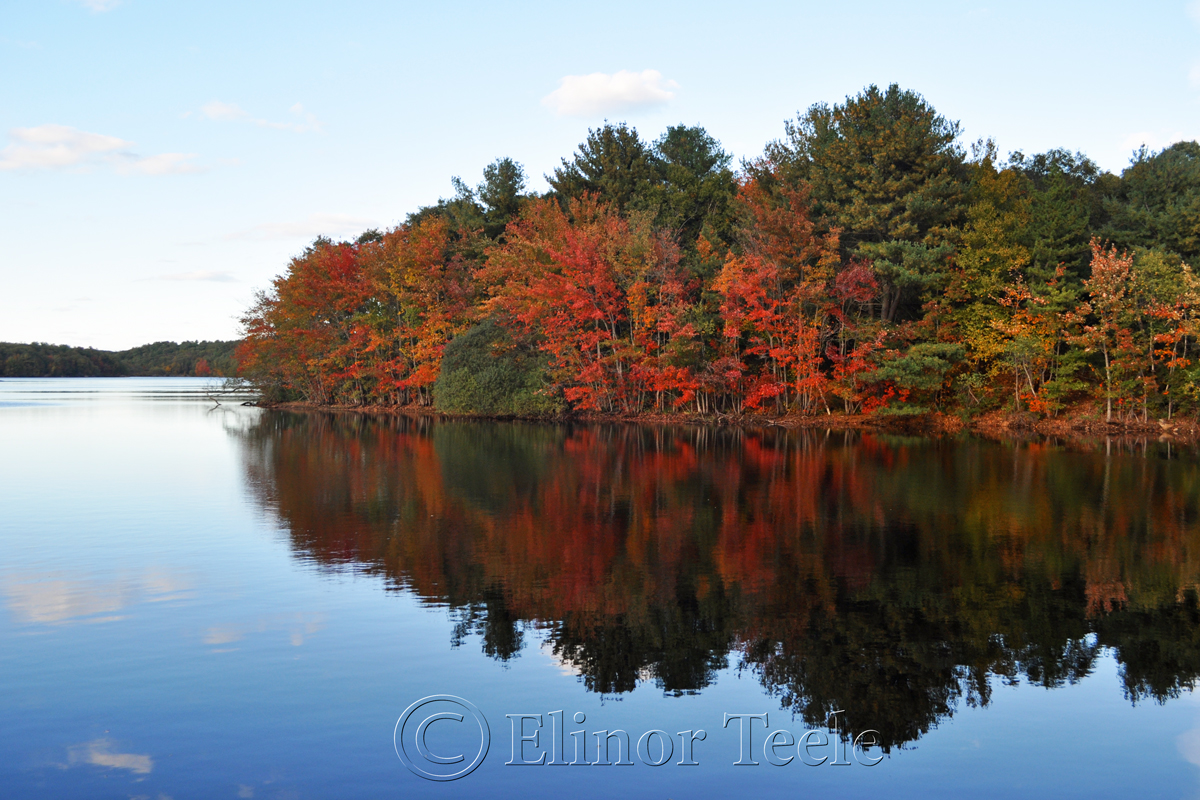 Red Fall Foliage, Gloucester MA 1