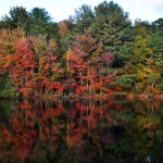 Red Fall Foliage, Gloucester MA 2