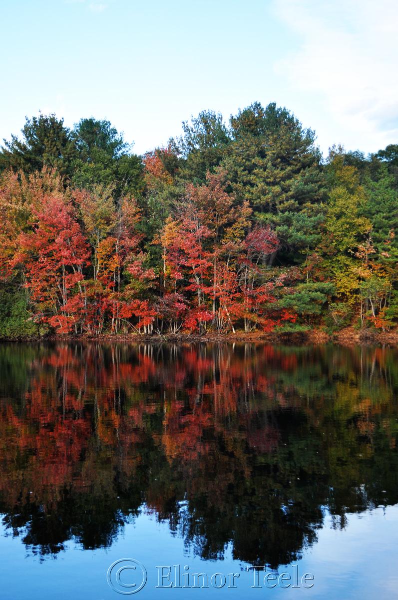 Red Fall Foliage, Gloucester MA 2
