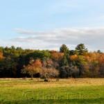 Appleton Farms, October Foliage, Ipswich MA 1