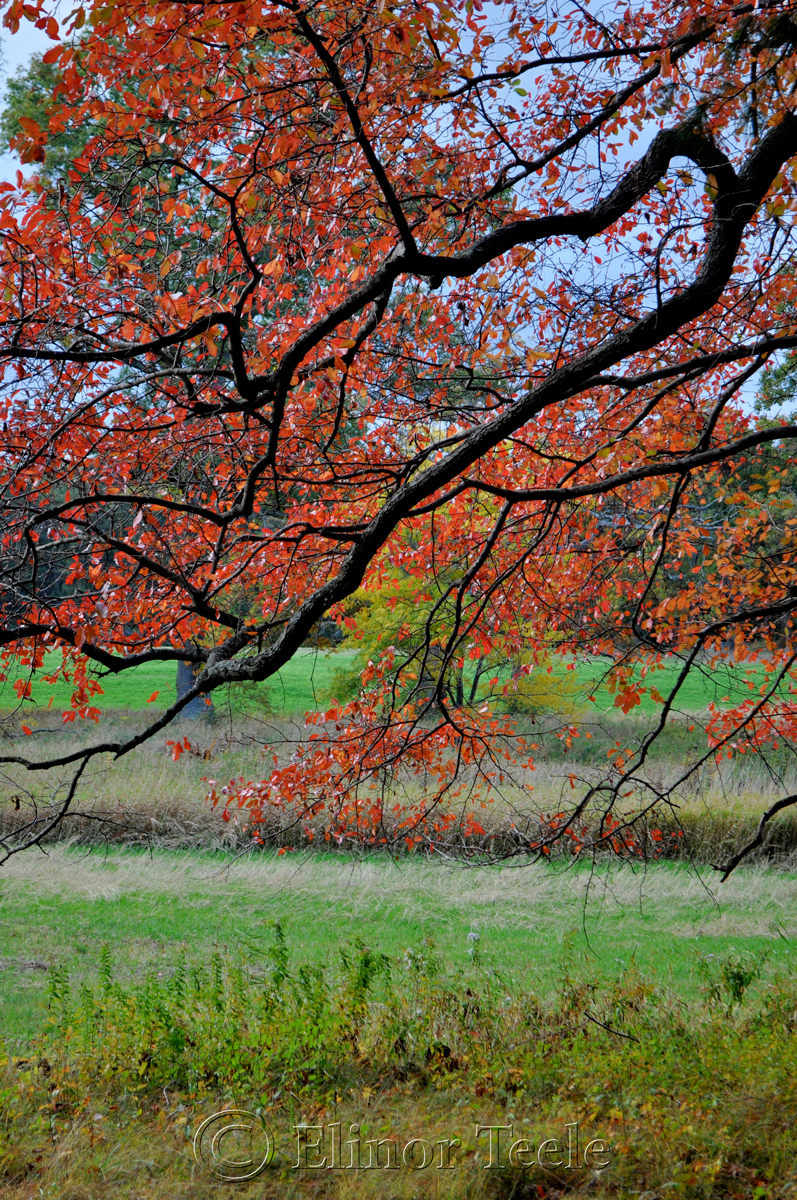 Appleton Farms, October Foliage, Ipswich MA 2