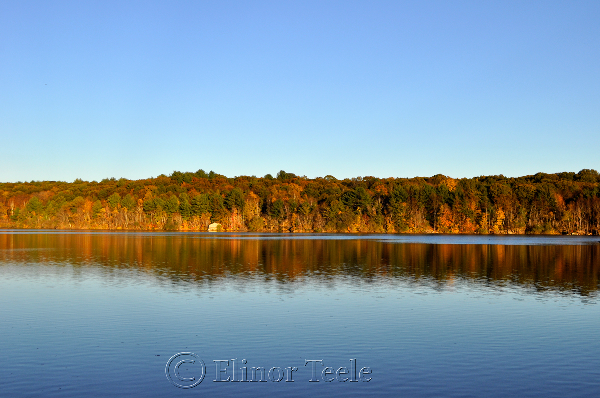 Gold Foliage, Goose Cove Reservoir, Gloucester MA 1
