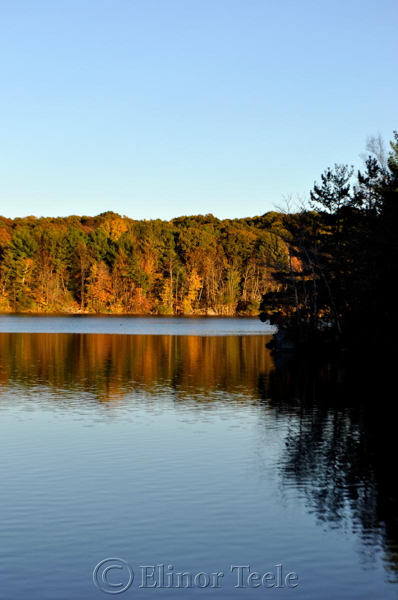 Gold Foliage, Goose Cove Reservoir, Gloucester MA 2