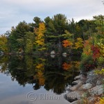Yellow Fall Foliage, Gloucester MA 2