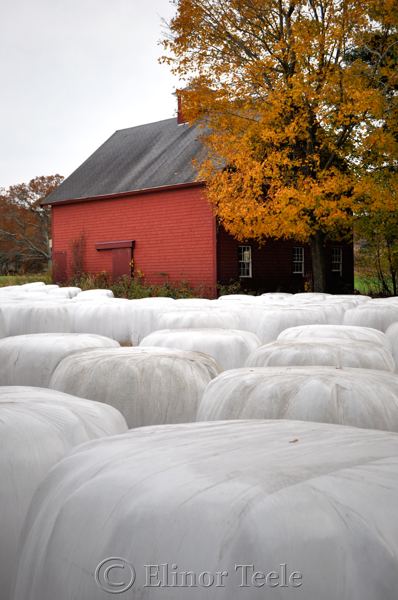 Appleton Farms in November, Ipswich MA