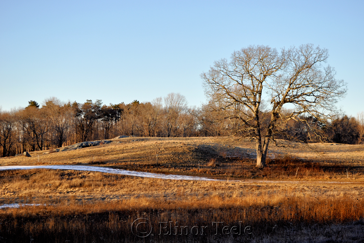 Appleton Farms - January 2015