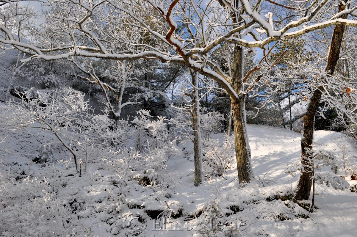Snowy Pasture, Annisquam MA 1