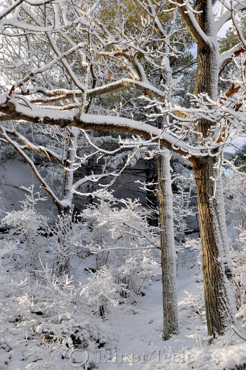 Snowy Pasture, Annisquam MA 2