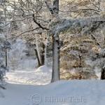 Snowy Pasture, Annisquam MA 3