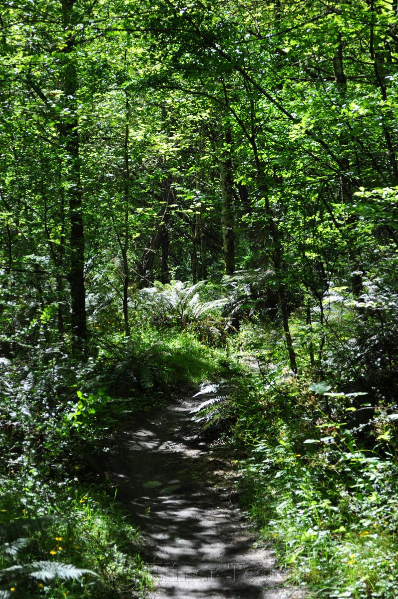 Bush Creek, Arrowtown