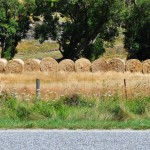 Haybales, Arrowtown