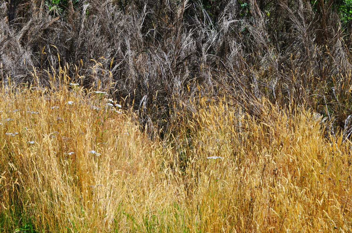 High Country Grasses