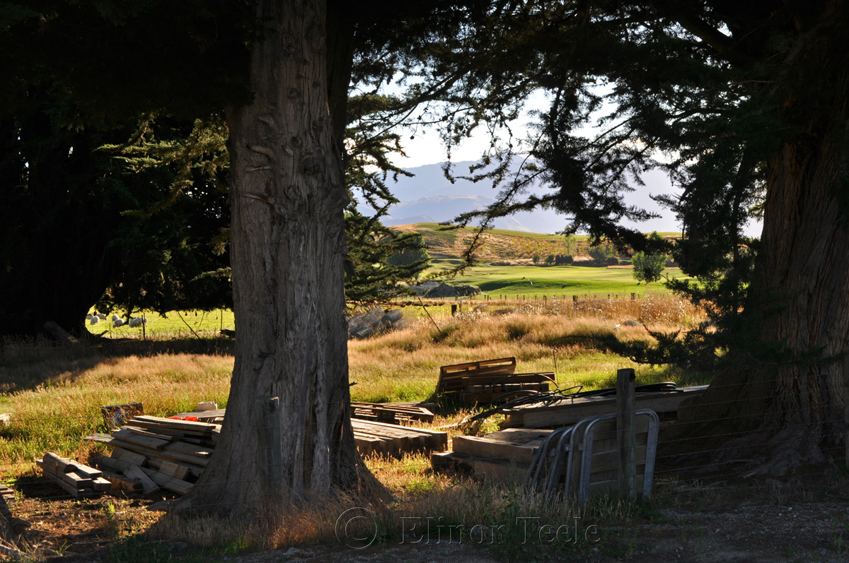 On the Farm, Crown Terrace, Central Otago 1