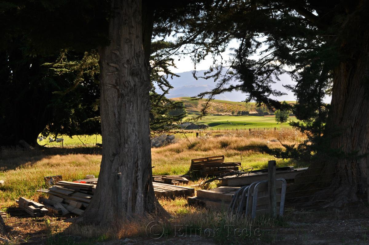 On the Farm, Crown Terrace, Central Otago 1