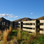 Sheep Yard Race, Crown Terrace, Central Otago