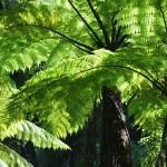 Abel Tasman Track 2