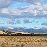 Canterbury Plains 1
