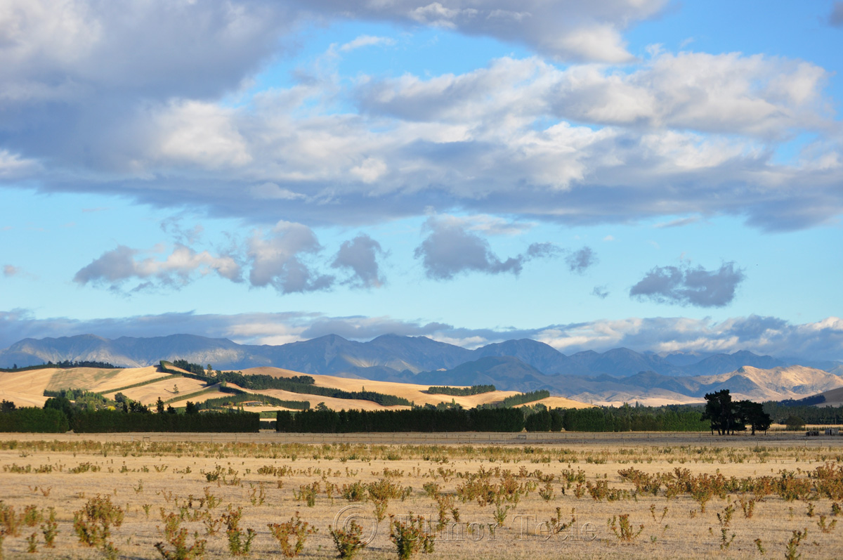 Canterbury Plains 1
