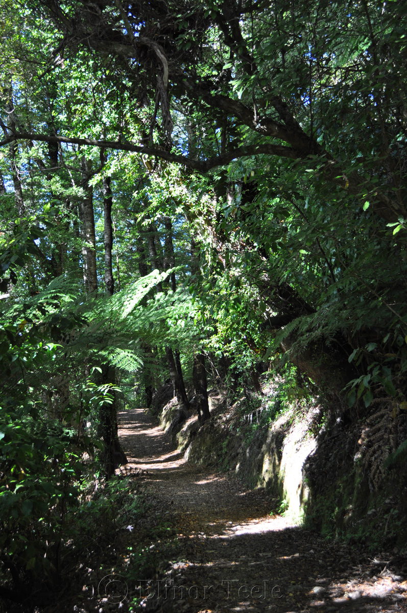 Queen Charlotte Track - Bush Walk
