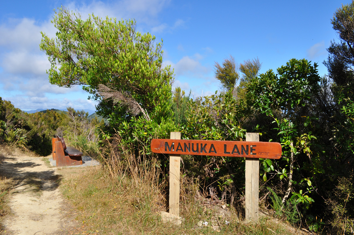 Queen Charlotte Track - Manuka Lane