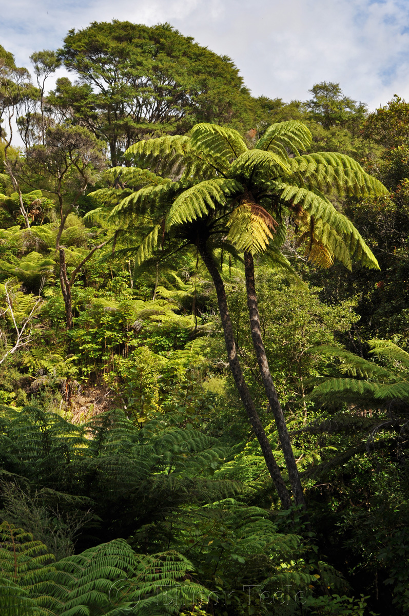 Queen Charlotte Track - Ship Cove Section - Bush
