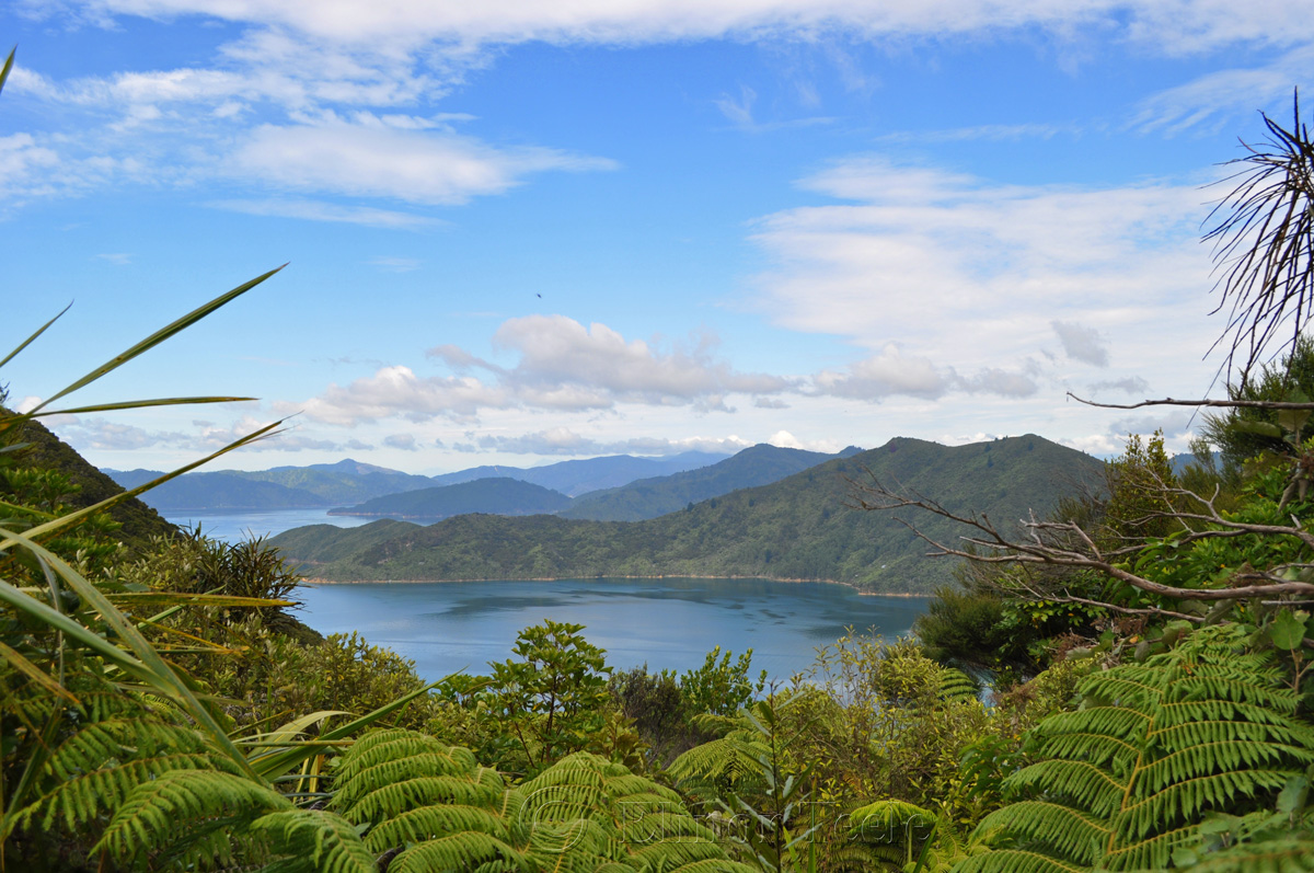 Queen Charlotte Track - Ship Cove Section - View